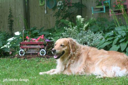 Maisy Bloom garden dog