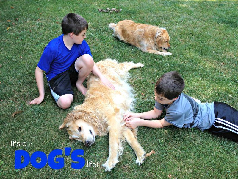 WCBday2dogs