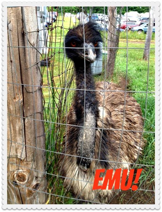 EmuFramed