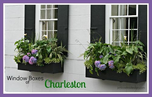 Window Boxes of Charleston at Jen Bowles Design