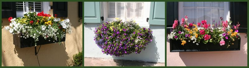 3 window boxes Charleston