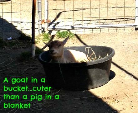 Goatbucket
