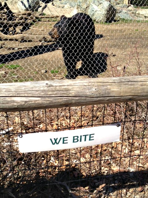 We bite