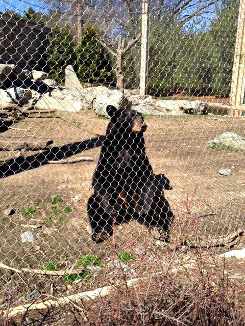 Pondering sitting bear