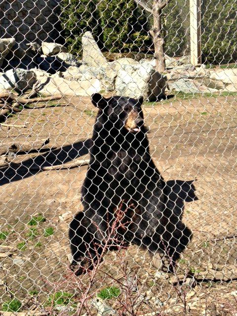 Mellow bear