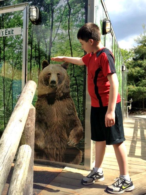 Bear Will
