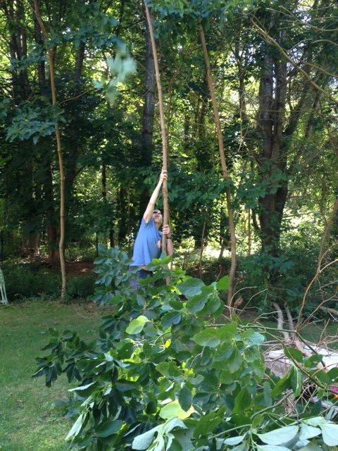 Rustic arbor cut down trees
