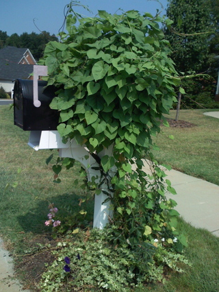 Mailboxaug